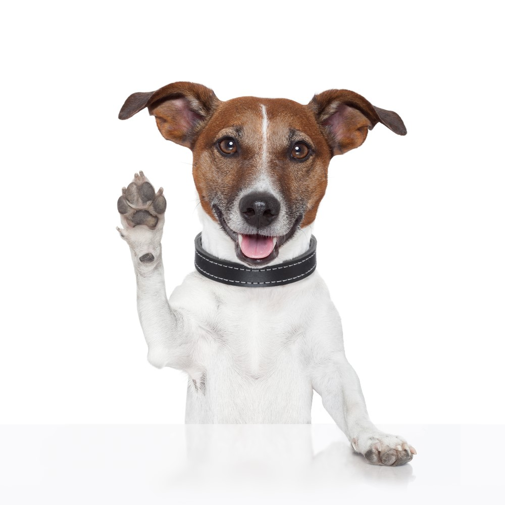 So you think you want a new pet? Adopting a new pet can be a fun and exciting experience for both the owner and the pet. It is important to plan for your new arrival in order to reduce stress and have a smooth transition.