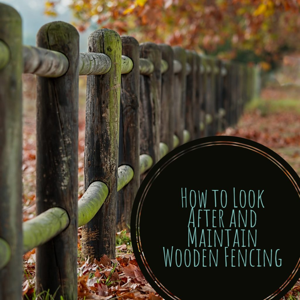 How to Look After and Maintain Wooden Fencing