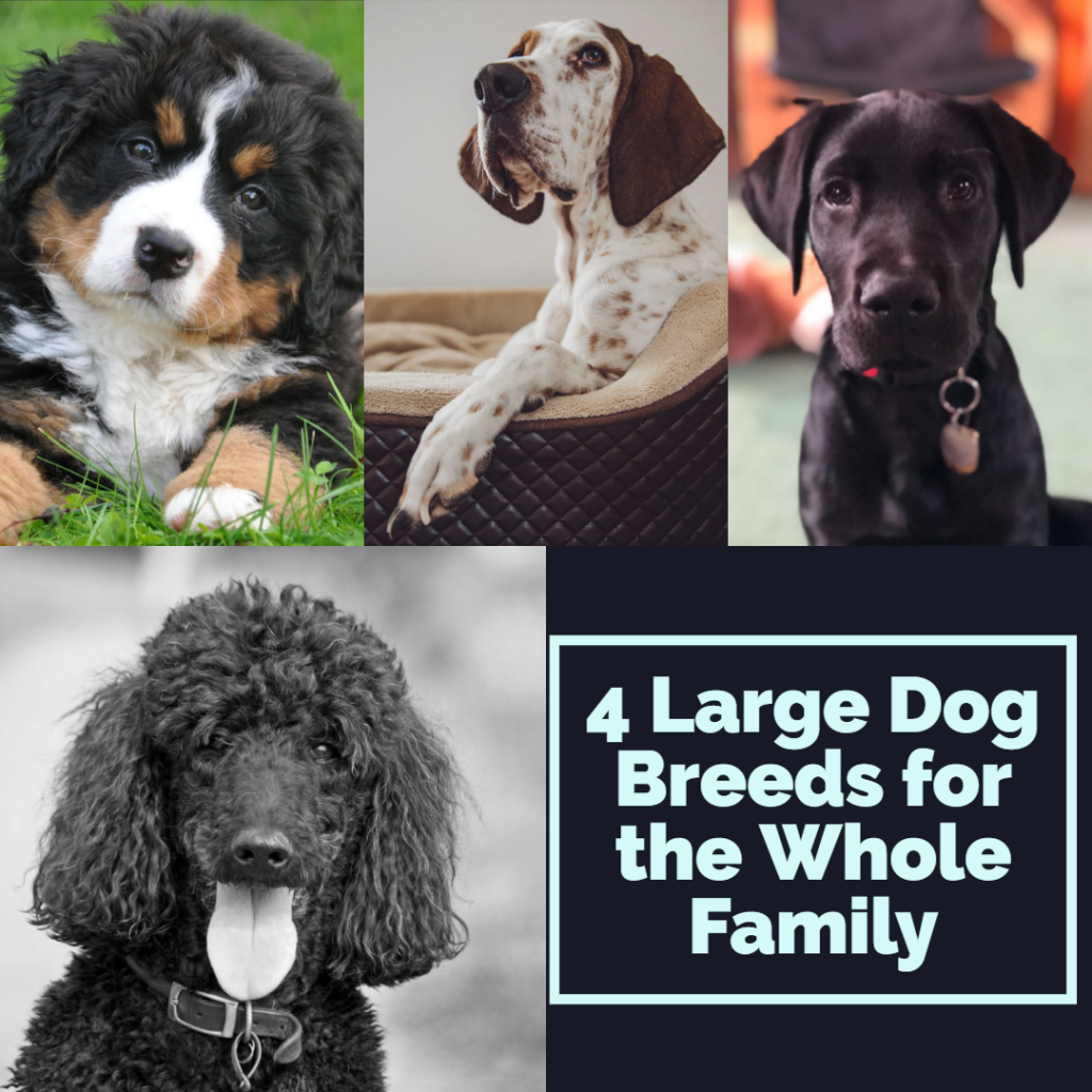 4 Large Dog Breeds for the Whole Family