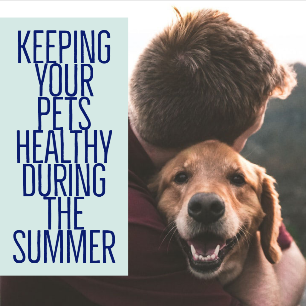 Keeping Your Pets Healthy During The Summer