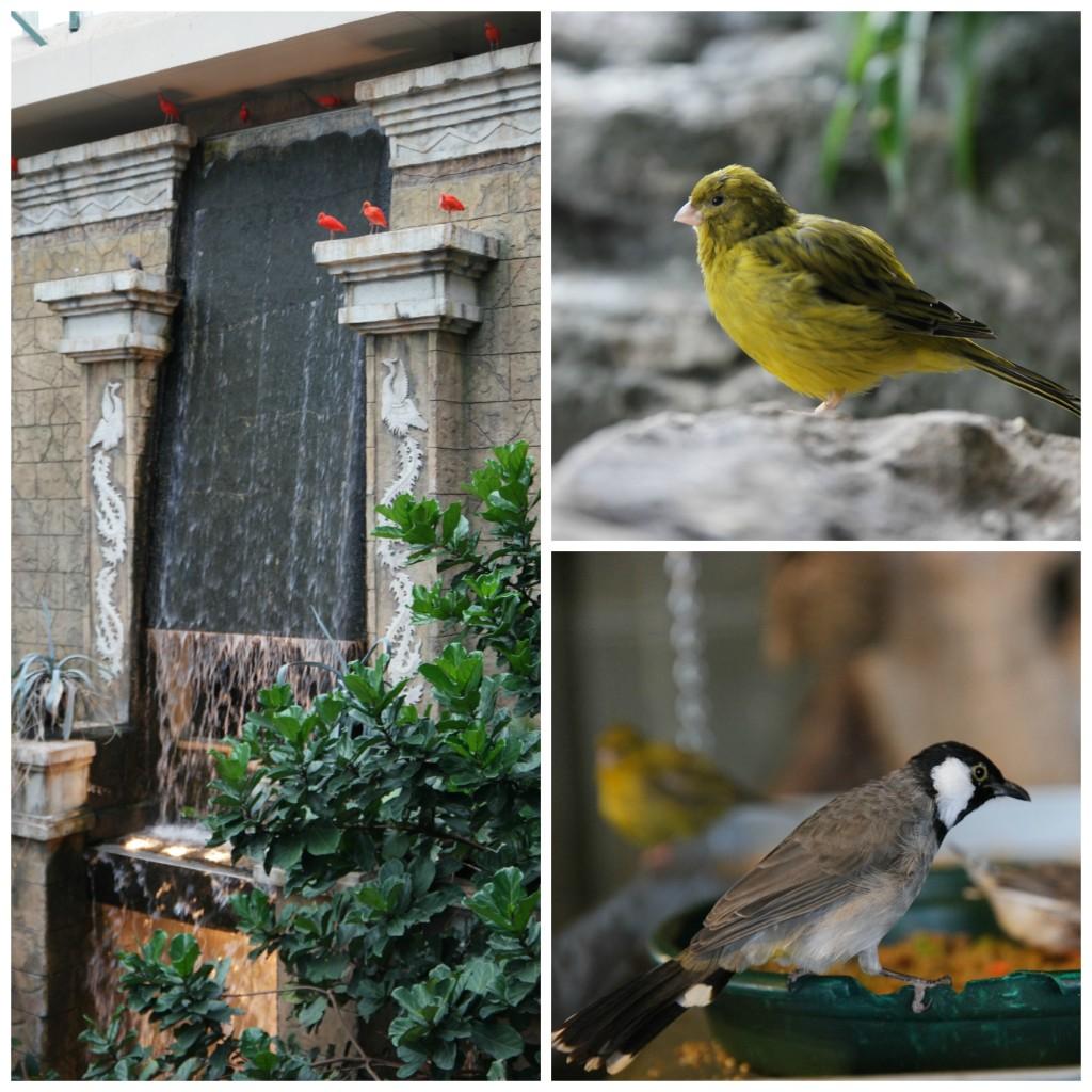 Bird-Kingdom