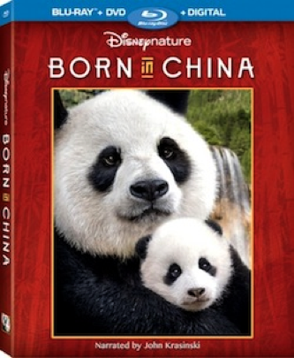 In Disney Nature's Born In China, narrated by John Krasinski, transports audiences to some of the world's most extreme environments of China where few people have ever ventured to witness wildly intimate and adorable moments in the lives of three animal families - a doting panda bear mother, a 2-year-old golden snub-nosed monkey, and a mother snow leopard.