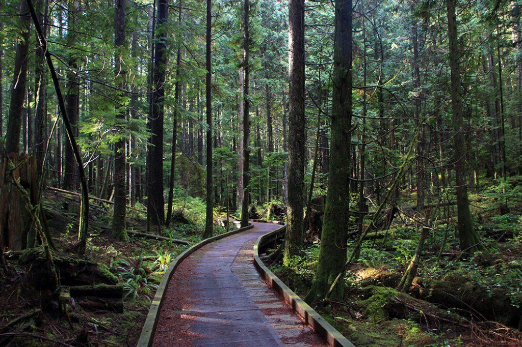 Rice Lake Trail