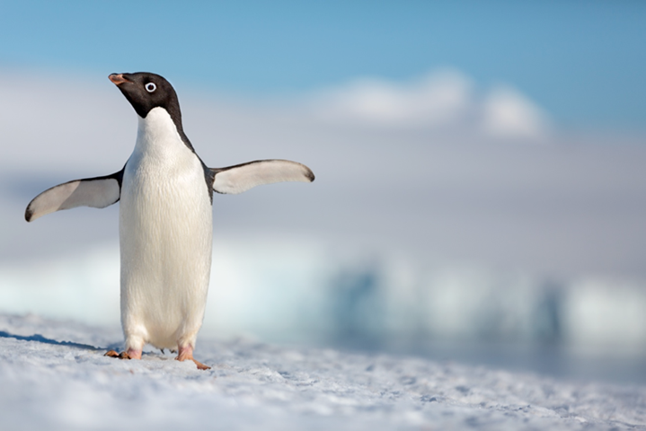 Disneynature's Penguins