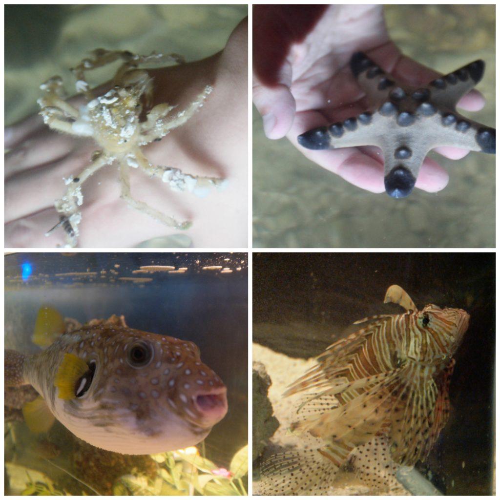 Team ECCO Ocean Center & Aquarium