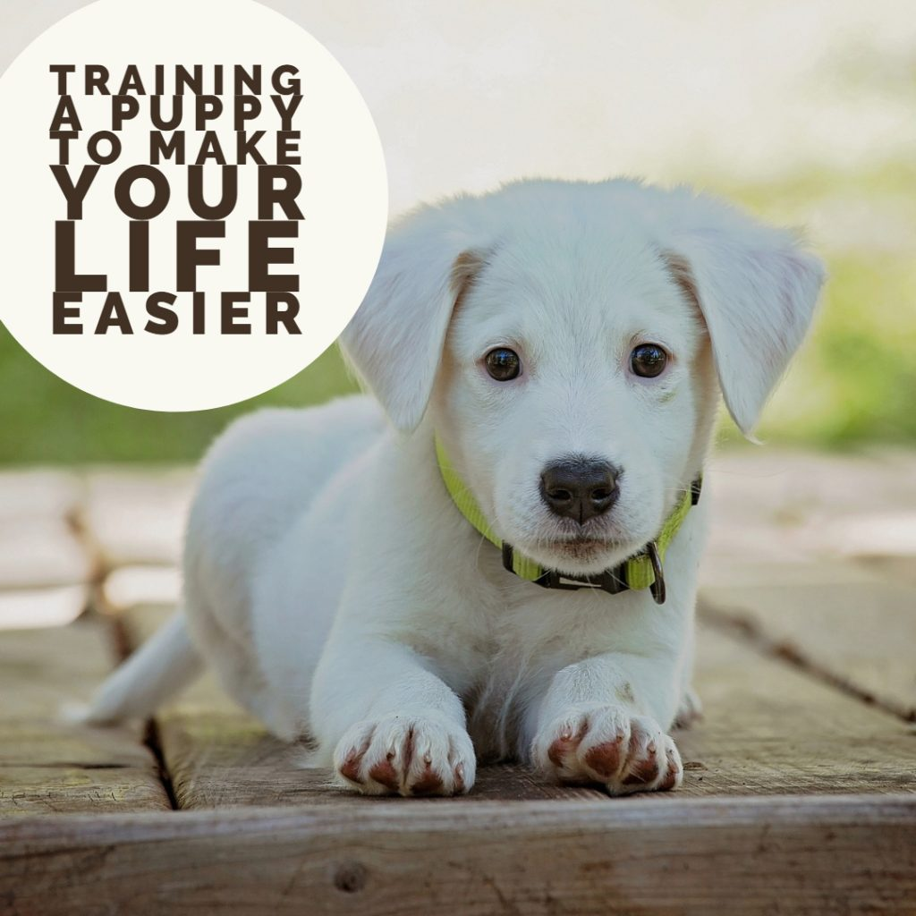 Training a Puppy to Make Your Life Easier